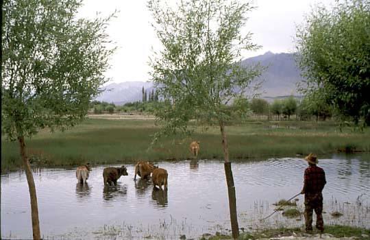 Vista de Ladakh India